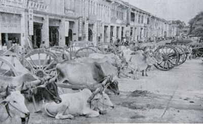 Old ways: Bullock carts were a common sight as it was used to ferry people and goods.