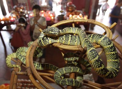 Still popular: Devotees offering prayers at the Snake Temple.