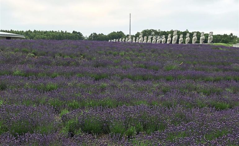 When in Hokkaido, follow the lovely scent of lavender